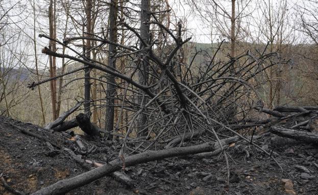 Una grave pérdida para el bosque autóctono